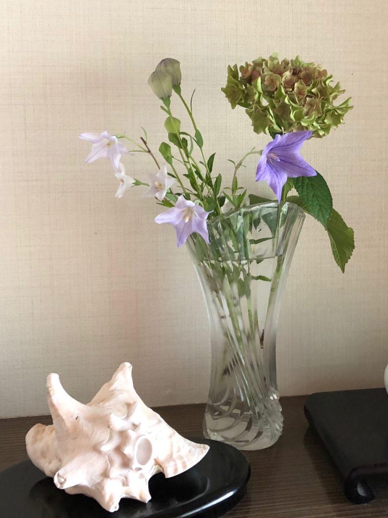 今日の玄関床は桔梗と紫陽花